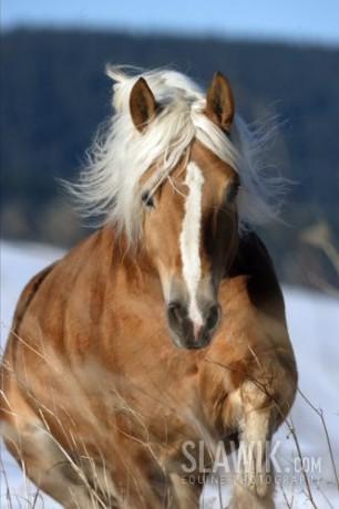 Kone Pony Fotoalbum Tapety Na Pocitac Tapety Hafling